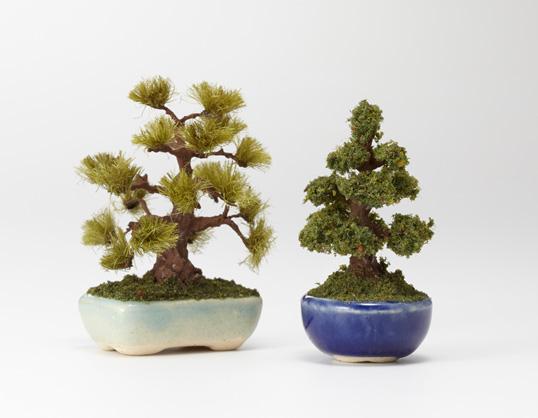 THE BONSAI/丸鉢杉
