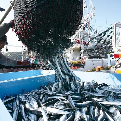 三陸女川「魚やの煮付」
